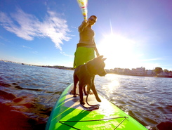 Provincetown harbor spot de stand up paddle en États-Unis