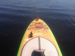Gordon River spot de stand up paddle en États-Unis
