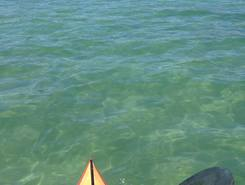 Henley Beach spot de stand up paddle en Australie