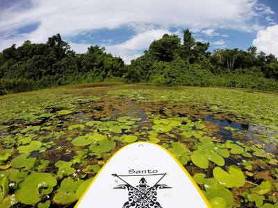 Vatthe Conservation Area Swamp, Matantas, Big Bay paddle board spot in Vanuatu