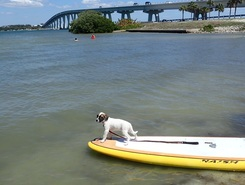 Fort Myers Beach paddle board spot in United States