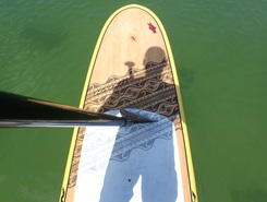 Park Shore paddle board spot in United States