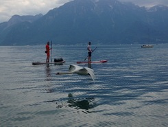 Léman Trip sitio de stand up paddle / paddle surf en Suiza