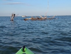 lake st. Clair sitio de stand up paddle / paddle surf en Estados Unidos