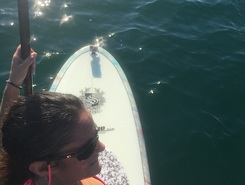 Atlantic spot de stand up paddle en États-Unis