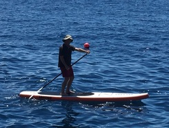 Funchal spot de stand up paddle en Portugal
