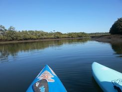 tingalpa creek paddle board spot in Australia
