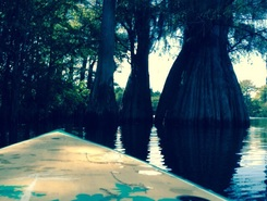 Dead lake  sitio de stand up paddle / paddle surf en Estados Unidos