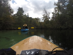 Weeki Wachee River sitio de stand up paddle / paddle surf en Estados Unidos