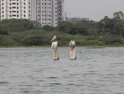 Great salt lake - Muttukadu spot de stand up paddle en Inde