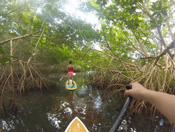 Mangrove sitio de stand up paddle / paddle surf en Guadalupe