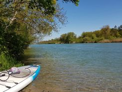 aare rupperswil auenstein sitio de stand up paddle / paddle surf en Suiza