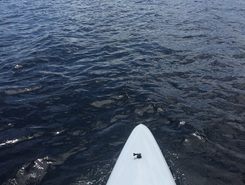 Dwight Bay paddle board spot in Canada