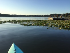 kitsap lake bremerton wa paddle board spot in United States