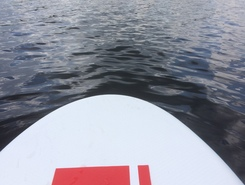 lipno  paddle board spot in Czech Republic