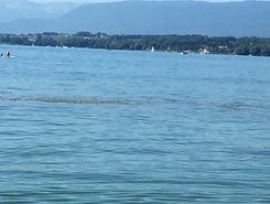 Lac Léman - Allaman sitio de stand up paddle / paddle surf en Suiza