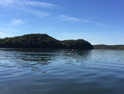TN River, mile marker479 paddle board spot in United States