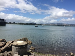 Tauranga Harbour paddle board spot in New Zealand
