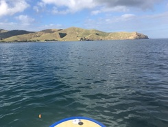 Port Jackson 1  paddle board spot in New Zealand