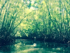 Mangroves  paddle board spot in Costa Rica