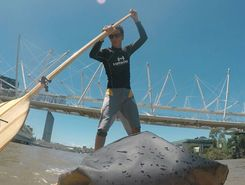 Brisbane River spot de stand up paddle en Australie