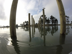 Christchurch Estuary sitio de stand up paddle / paddle surf en Nueva Zelanda