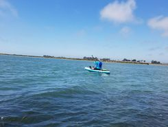 Elkhorn Slough sitio de stand up paddle / paddle surf en Estados Unidos
