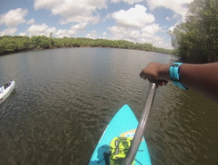 Pont de Montsinery paddle board spot in French Guiana