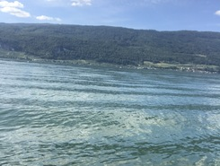 Nidau - Biel/Bienne paddle board spot in Switzerland