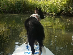 sup in de biesbosch  paddle board spot in Netherlands