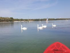 Parc de Miribel Jonage sitio de stand up paddle / paddle surf en Francia