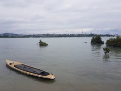 Okahu bay sitio de stand up paddle / paddle surf en Nueva Zelanda