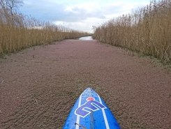 Jan Durkspolder paddle board spot in Netherlands